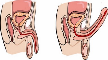 assunzione proteine erezione